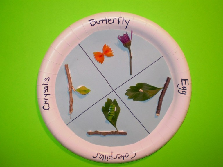 butterfly lifecycle on paper plate craft