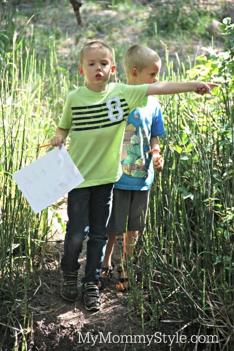 scavenger hunt for bugs