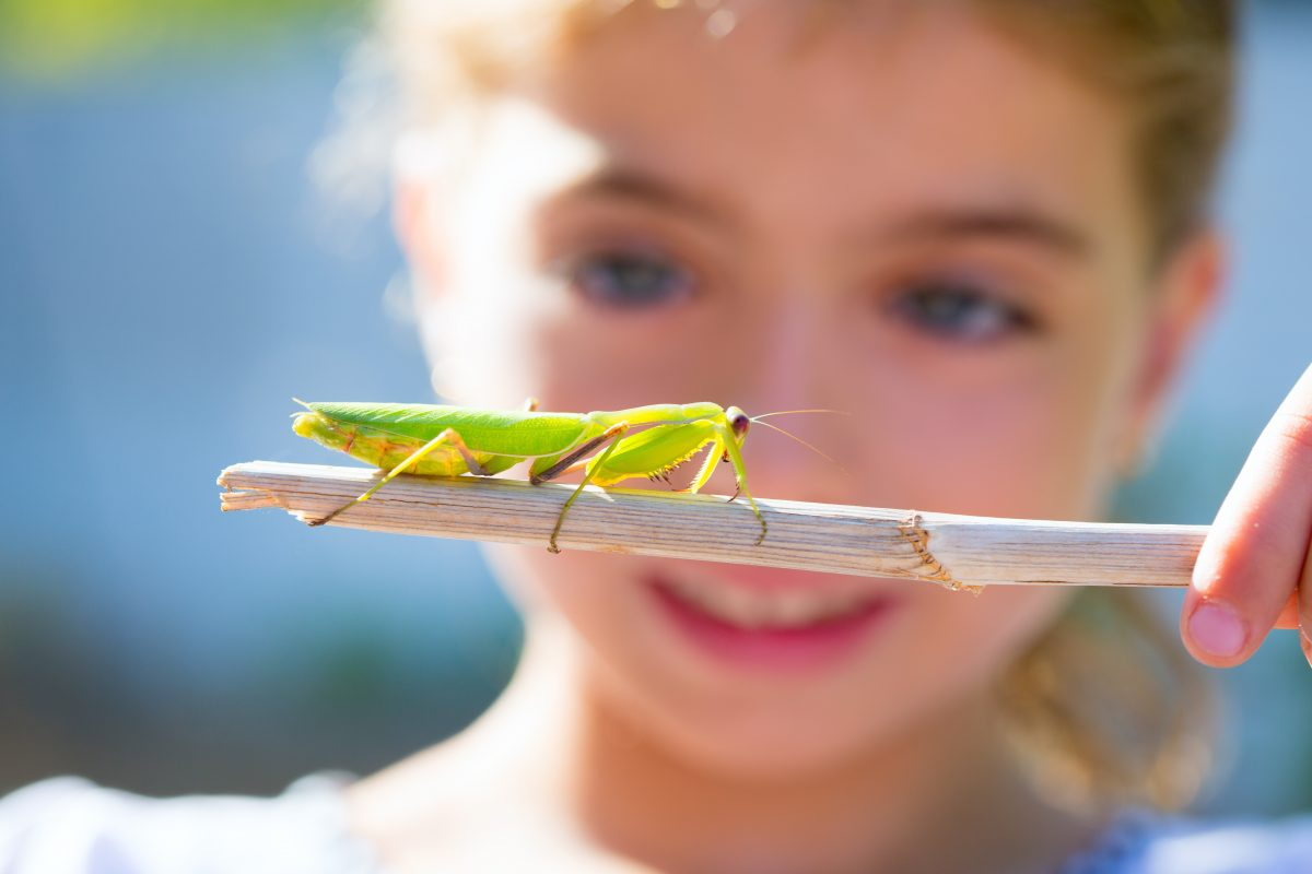 Girl with grasshopper on a stick