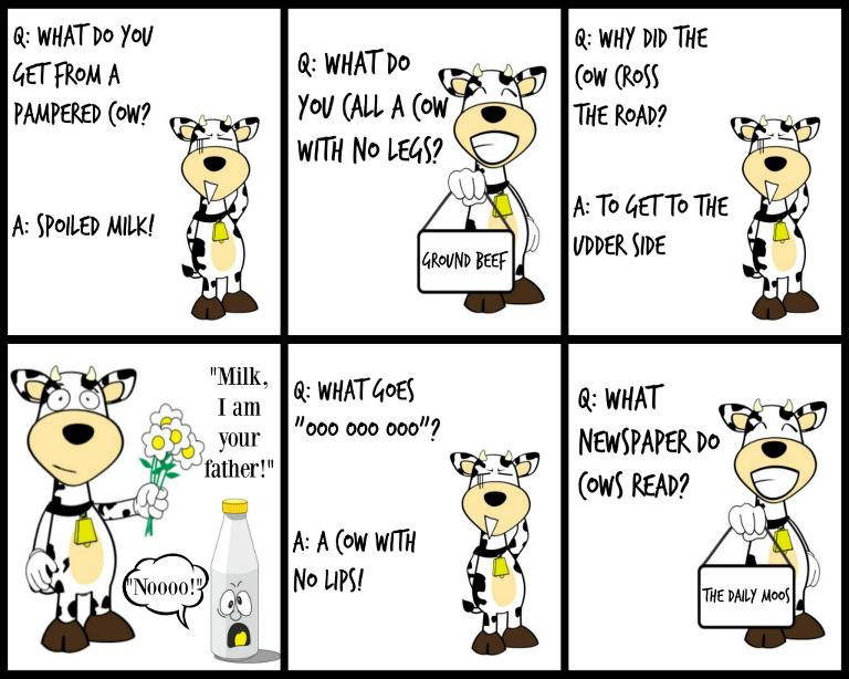 cow jokes, lunch box jokes, horizon organic, mymommystyle.com, cow joke, funny cow
