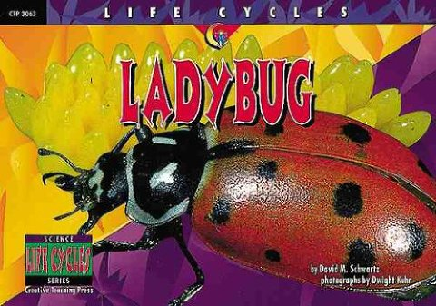 ladybug life cycles book