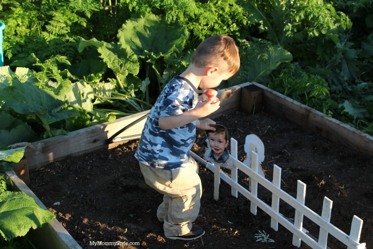 Creating a family garden, eco scraps, my mommy style, gardening with kids, gardening plots