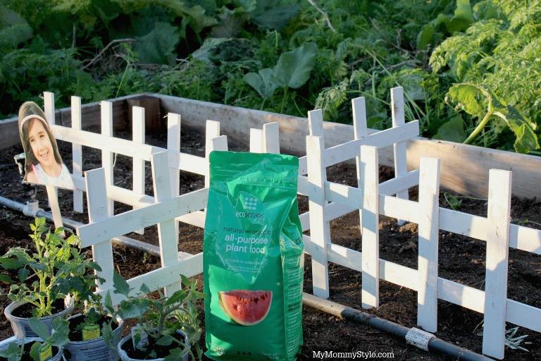 Family garden, eco scraps, gardening with kids