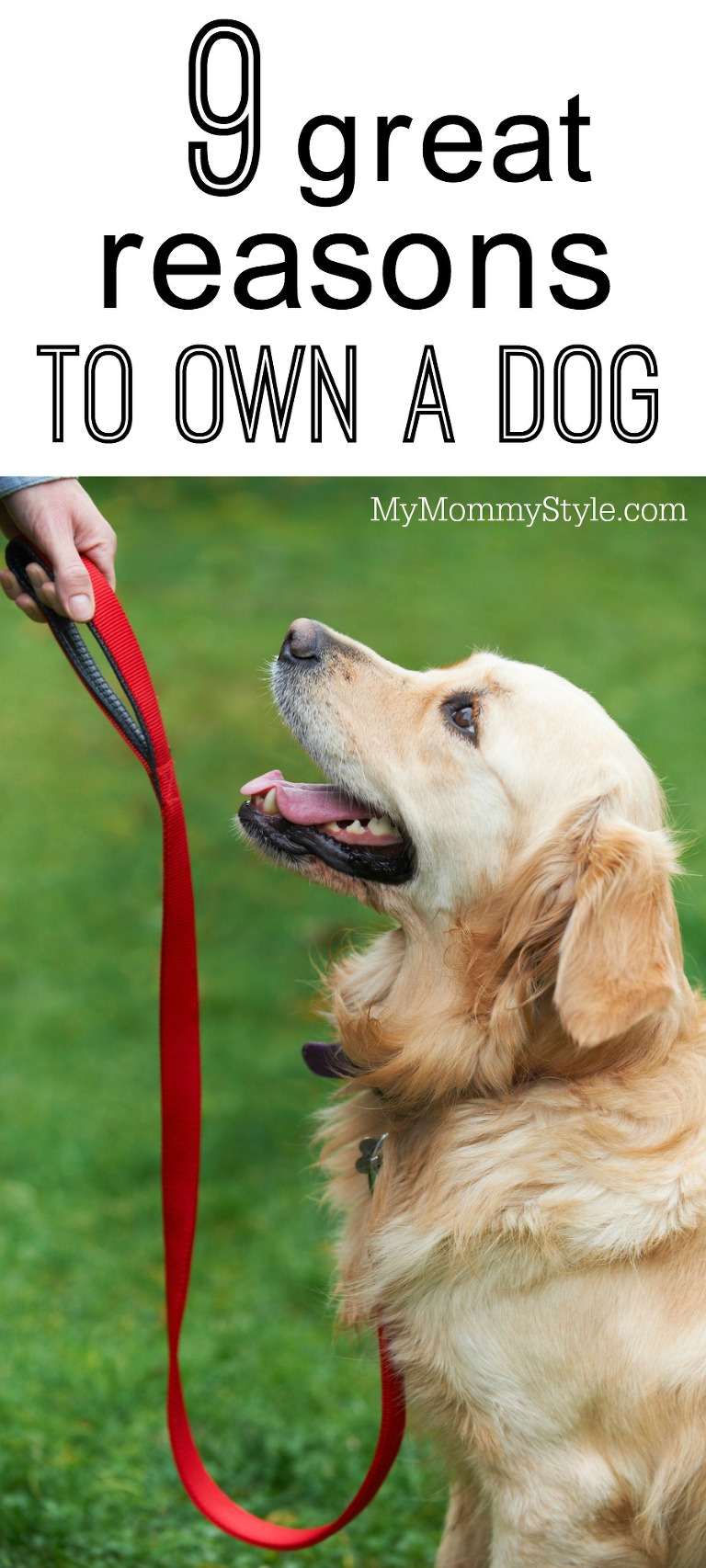 9 great reasons to own a dog